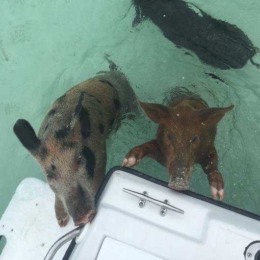 Bahamas Ocean Safaris James Dunnam